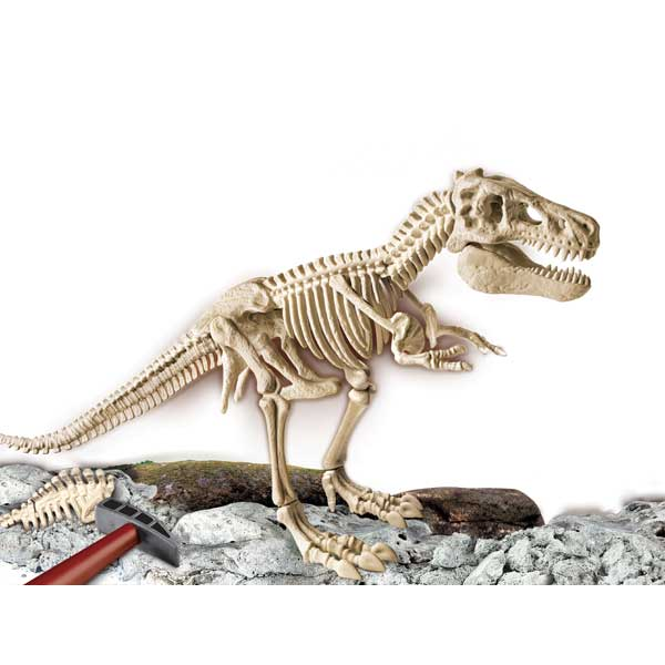 Arqueologia T-Rex Gigante - Imatge 1